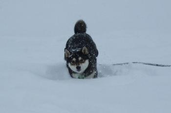 雪 5.jpg